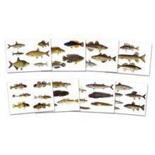 Fiskkort