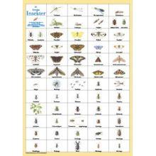 Svenska Insekter A4 kort