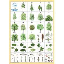 Svenska Träd A4 kort