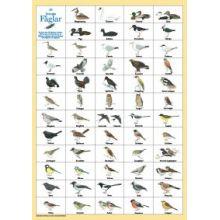 Svenska Fåglar A4 kort