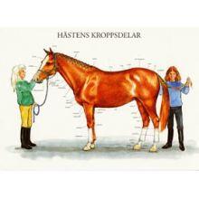 Häst A4
