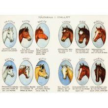 Hästarna i stallet A4