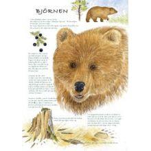 Björnen A4