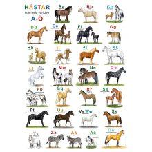 Hästar från hela världen ABC