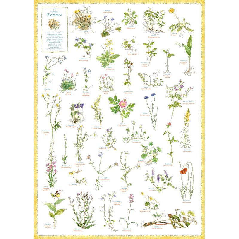 42 Svenska Blommor affisch