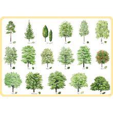 Träd underlägg