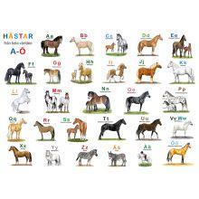 Hästar från hela världen underlägg