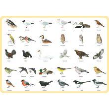 Fåglar underlägg
